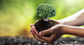 Ecosia : le moteur de recherche écologique qui veut faire de l'ombre à Google