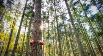 Le bain de forêt, LA méthode de relaxation ultime en 2020