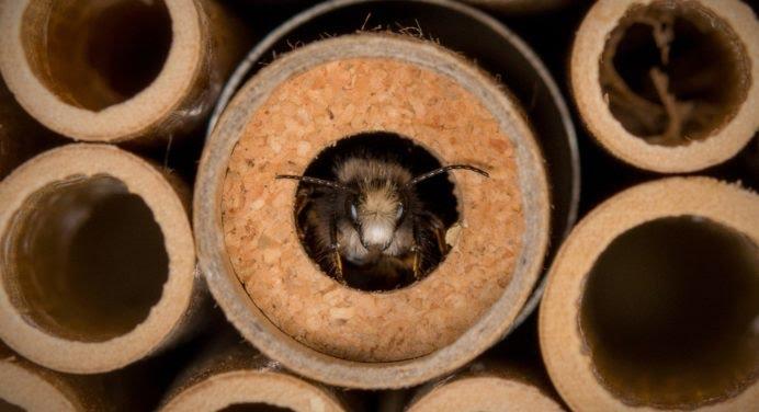 BeeHome : sauvez la planète, adoptez des abeilles !