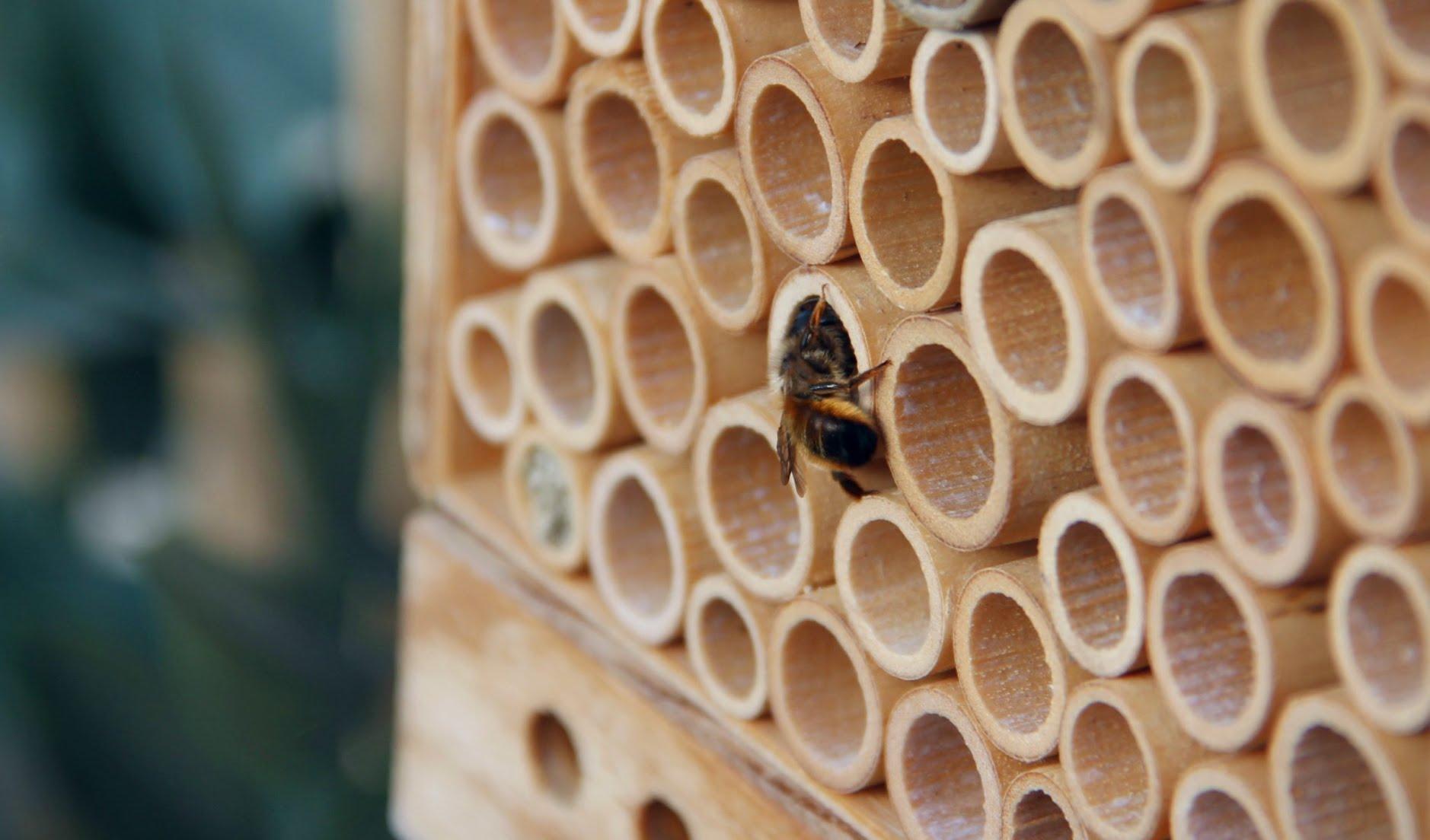 Les abeilles de la BeeHome ne piquent pas