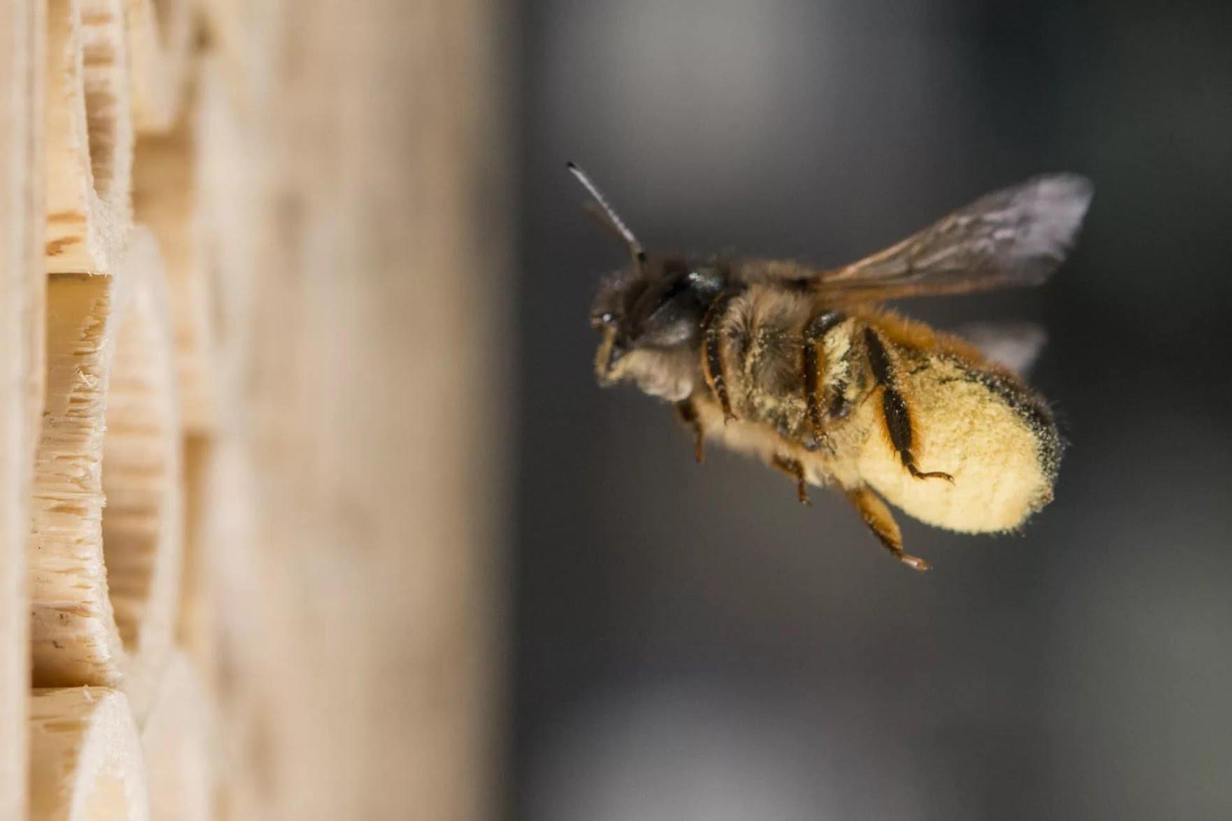 Adopter des abeilles avec la BeeHome