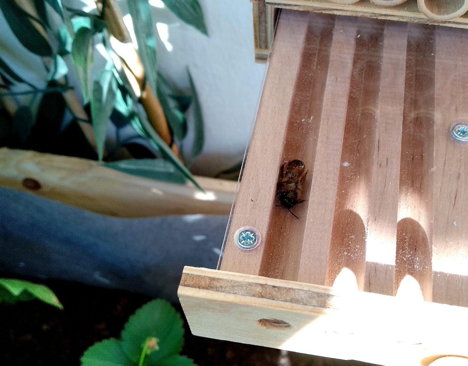 Tiroir de la BeeHome Observer