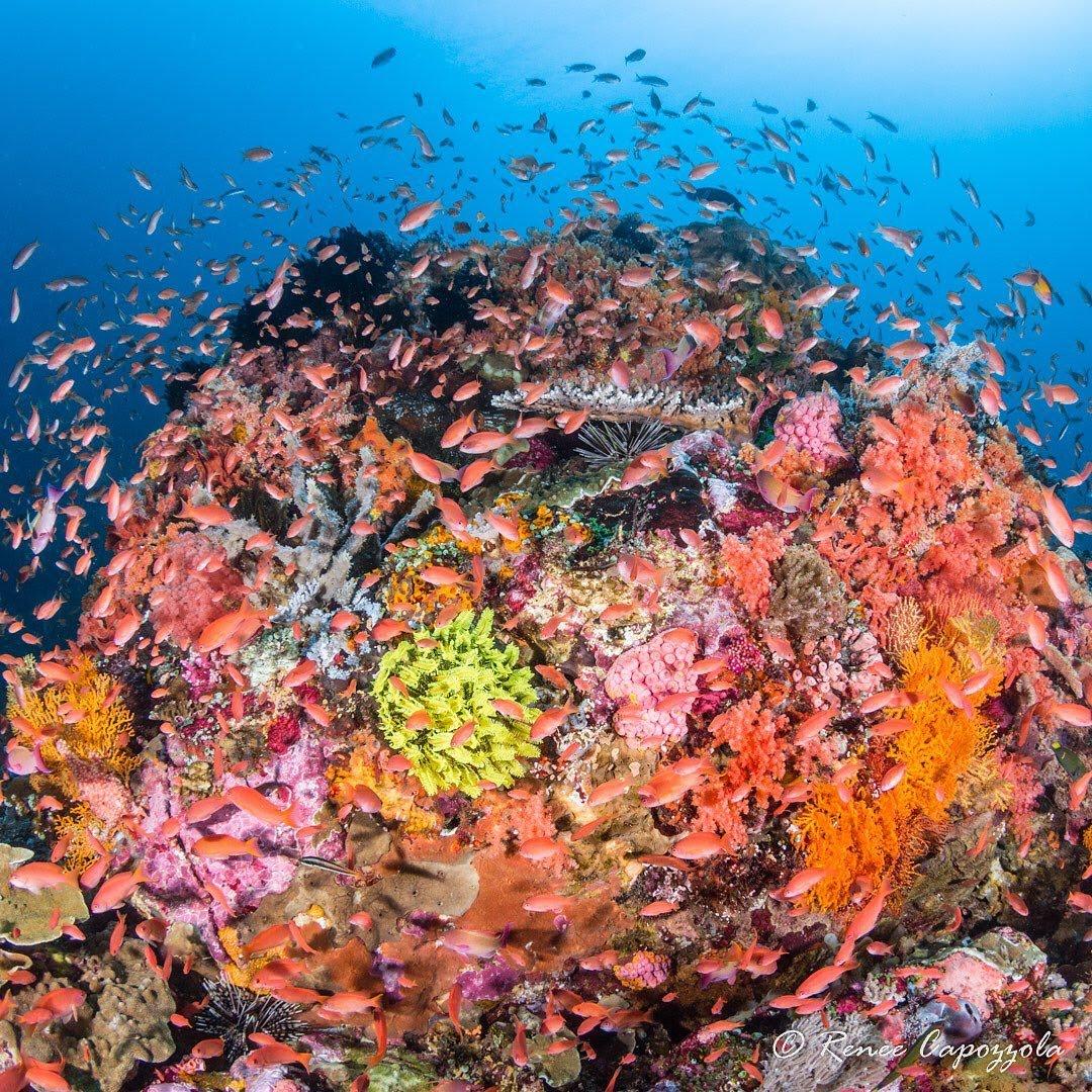 faune polynesienne