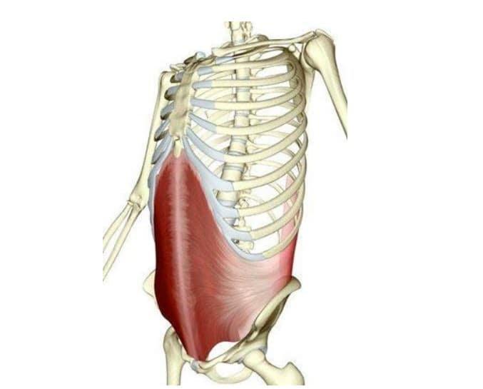 Renforcer ses abdos - muscle transverse