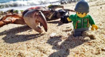Des photos qui prouvent que les Lego ont une vie palpitante